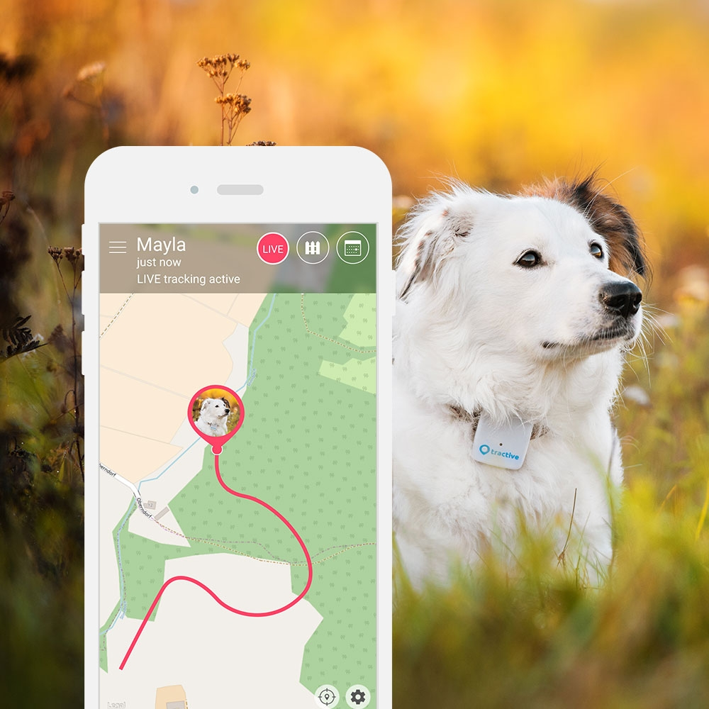 tractive-gps-live-tracking-dogtracker-app_1.jpg