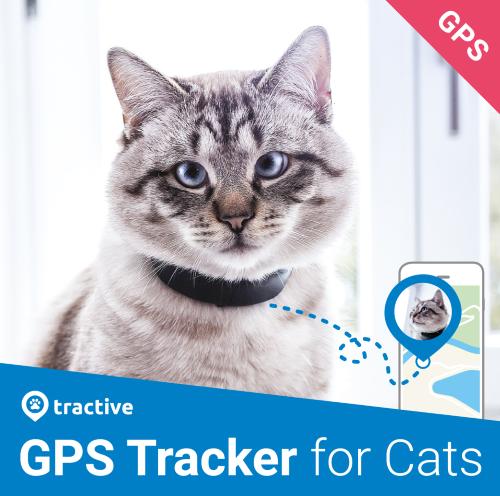 """Résultat de recherche d'images pour """"tractive gps chat"""""""